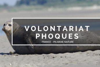 volontariat phoques picardie nature raton reveur blog