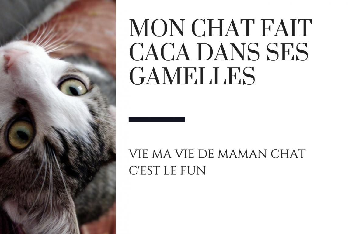 mon chat fait caca pipi chat hors litière raton reveur blog